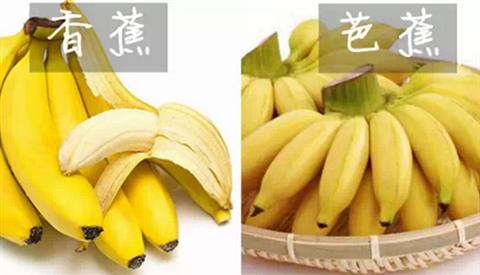 香蕉和芭蕉有什么不同