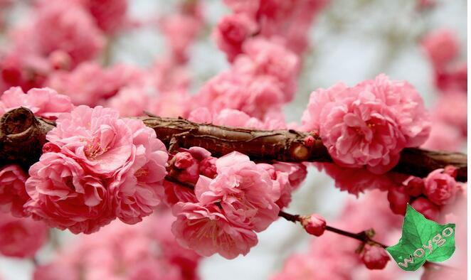 春天如何预防花粉过敏